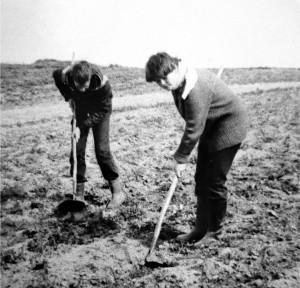 1981 Июнь ЛТО Факториал Емецк. работа на полях